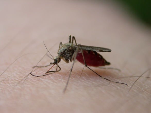 Boulder County Sheriff contracts West Nile Virus