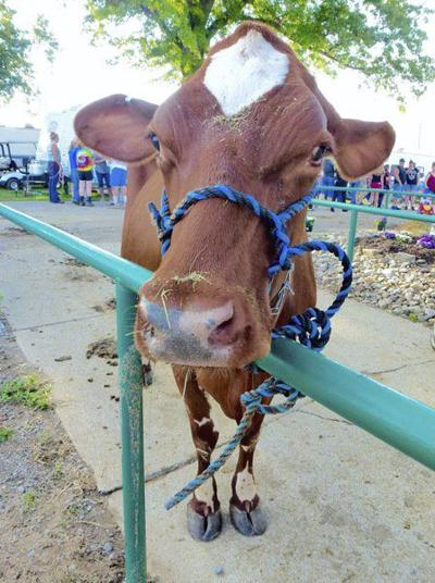 Fairgrounds bustling with preparations, judging