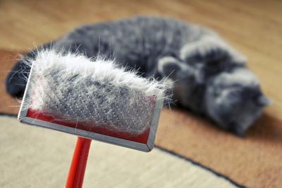 PET TALK: Don't brush off feline dandruff