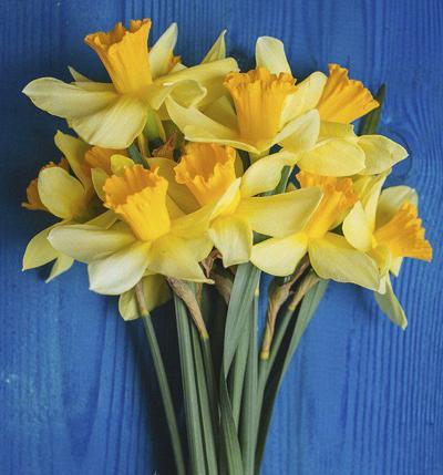 American Cancer Society Daffodil Days back for 2020