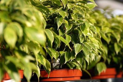 Don't just pick up and move, plants require more care