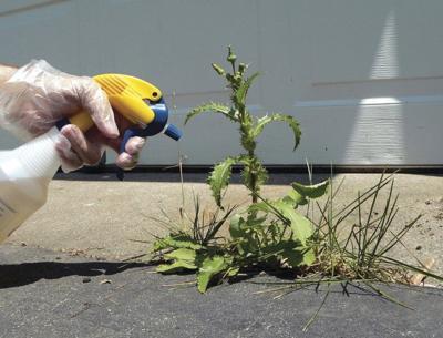 Weeds bring out the killer instinct