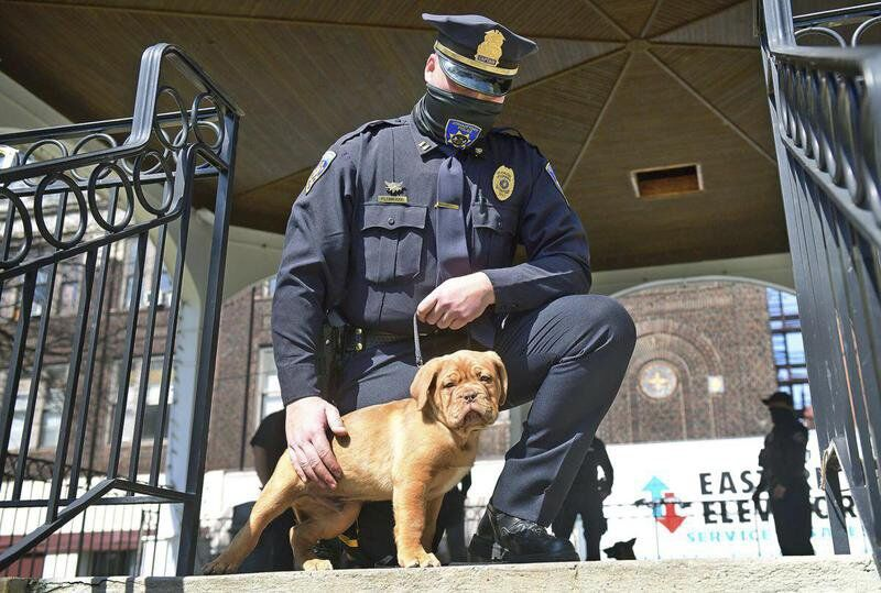 Johnstown police introduce two K-9 unit additions