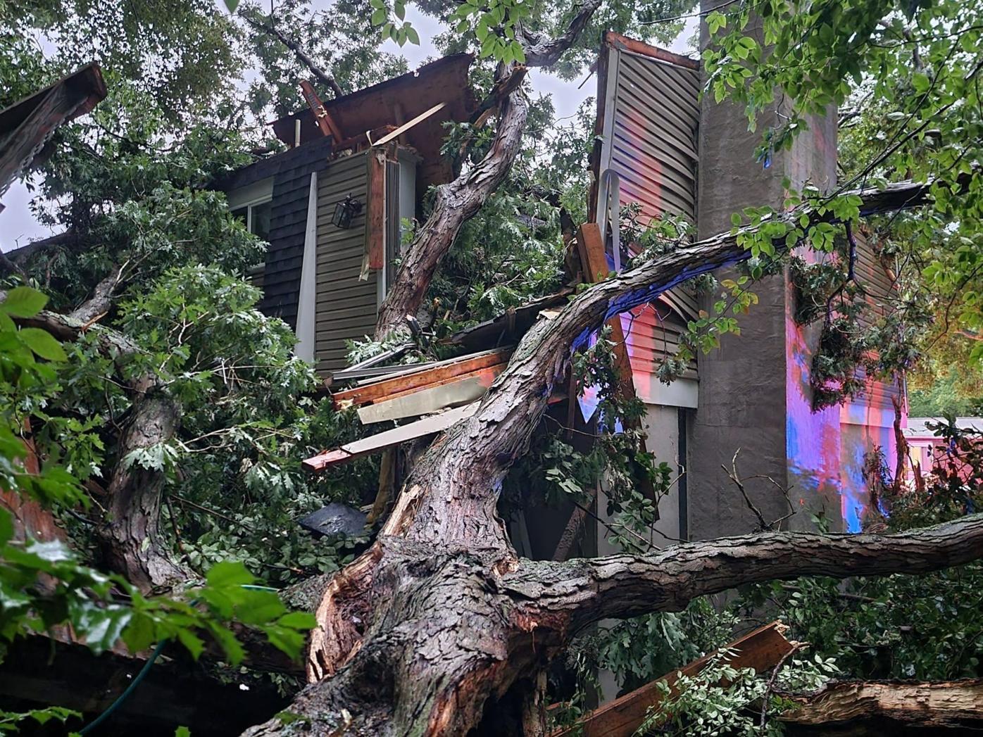 Tree into house