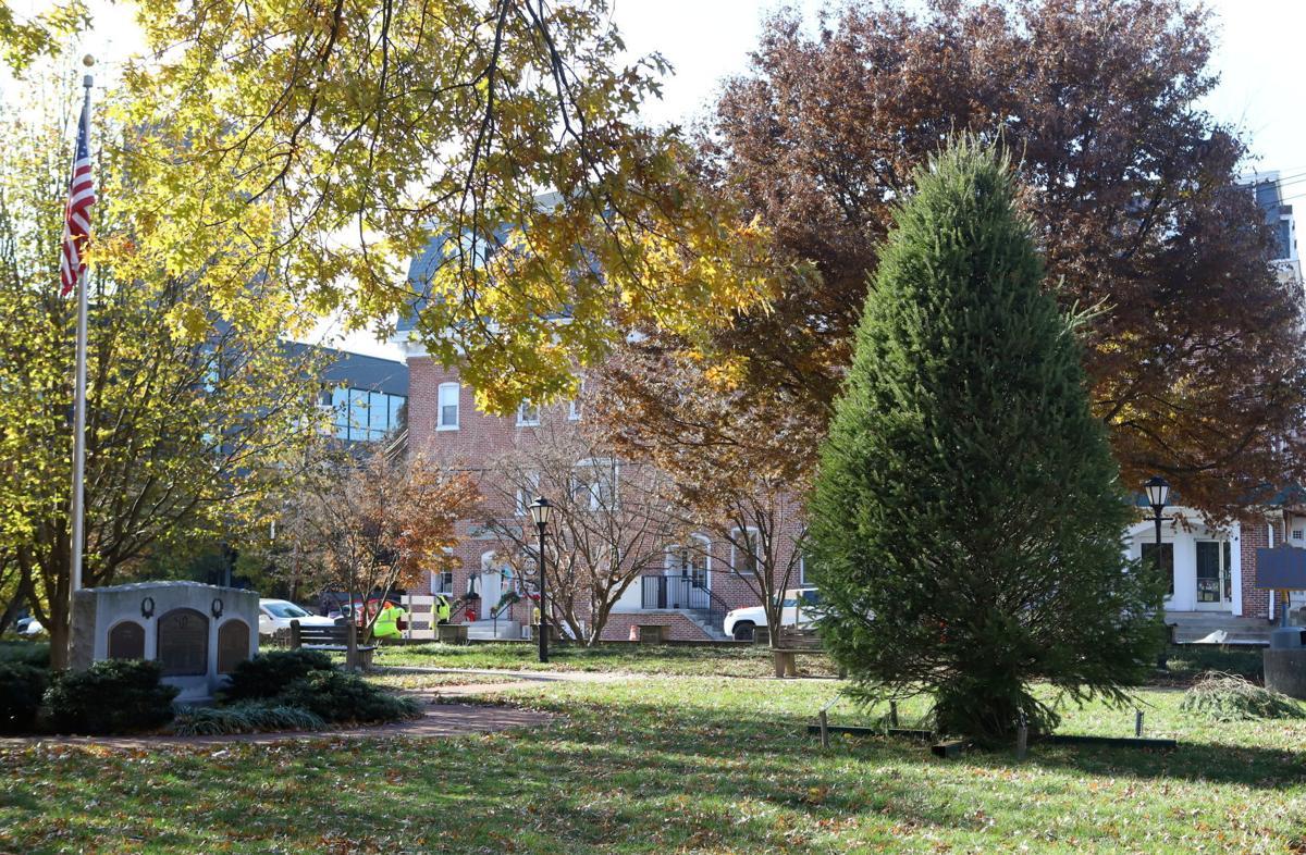 Academy Lawn tree