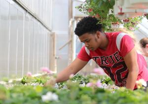 Christiana High School students preparing for annual plant sale