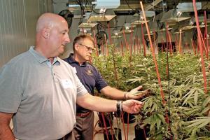 Delaware marijuana legalization bill clears House committee