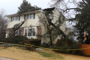 Storm brings down trees, causes power outages in Newark