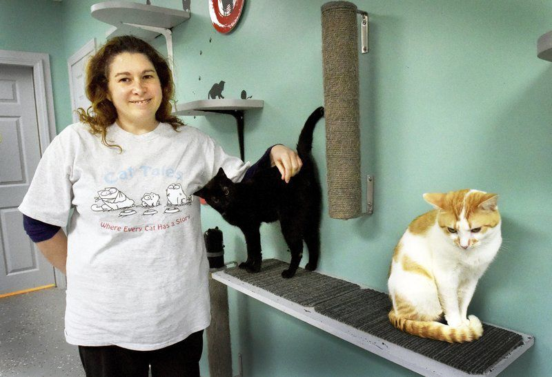Cat Tales rescue shelter opens in Seabrook