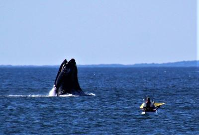 Sargent's view: The whale and fish of Seabrook Beach