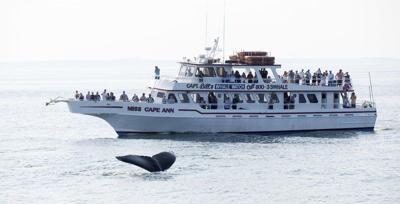 Couple spots whale breaching off Plum Island