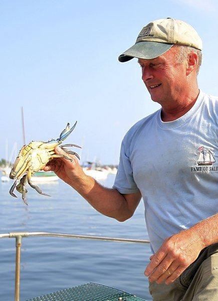 A blue visitor: Biologist finds southern crabs in local