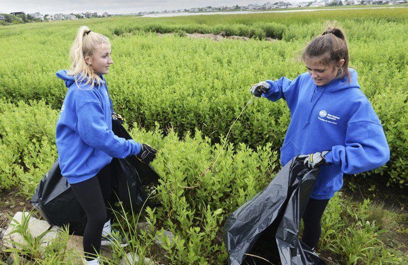 Volunteers pull invasive pepperweed on Plum Island