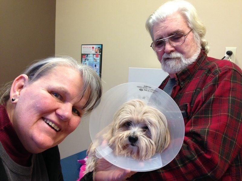 Predator attacks, badly injures Salisbury dog