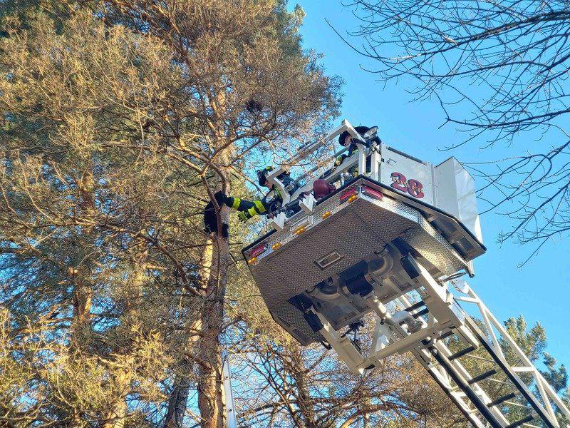 West Newbury firefighters help a feline in need