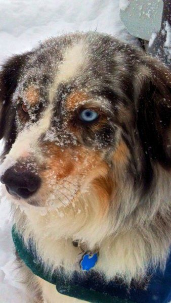 Archibald's view: A sick dog, a second chance