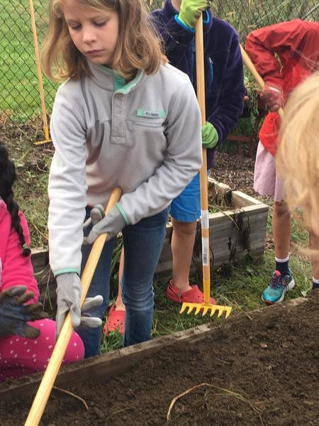 Page Students Garden Bounty Reaps Awards At Topsfield Fair Local