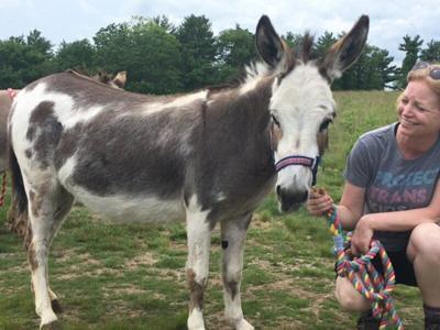Donkeys, horses coming toNewburyport on Saturday