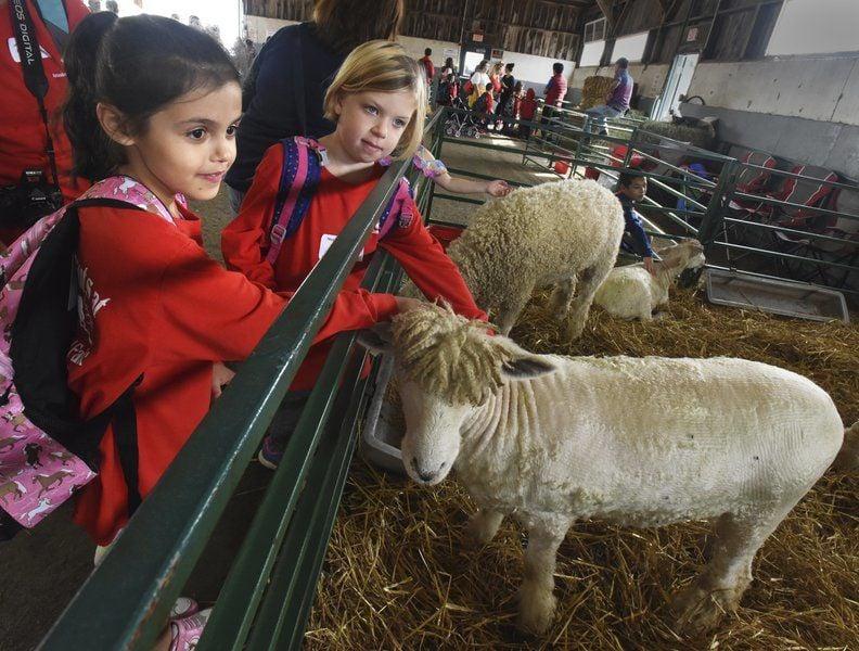 Amesbury First Graders Visit Topsfield Fair Local News