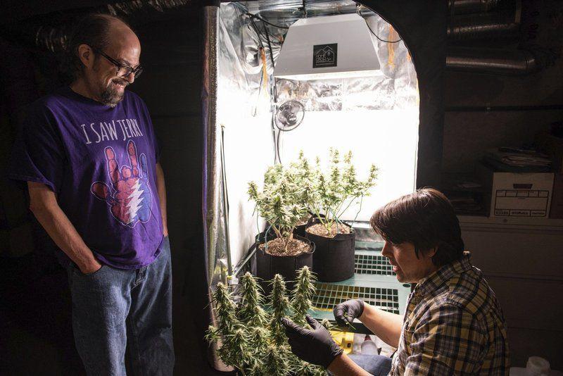 Business makes house calls to grow marijuana