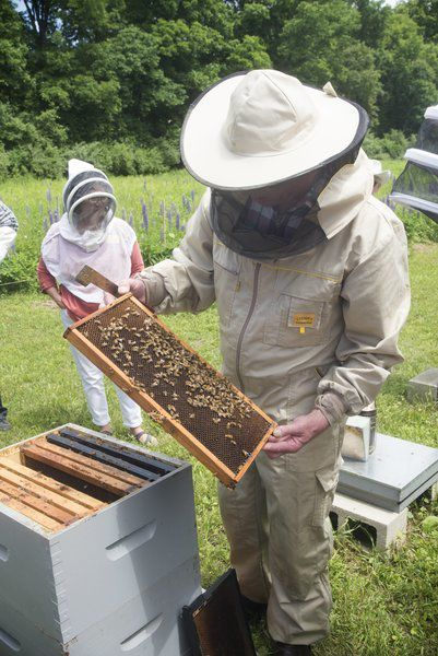 Statewide group pushing 'Save the Bees' legislation