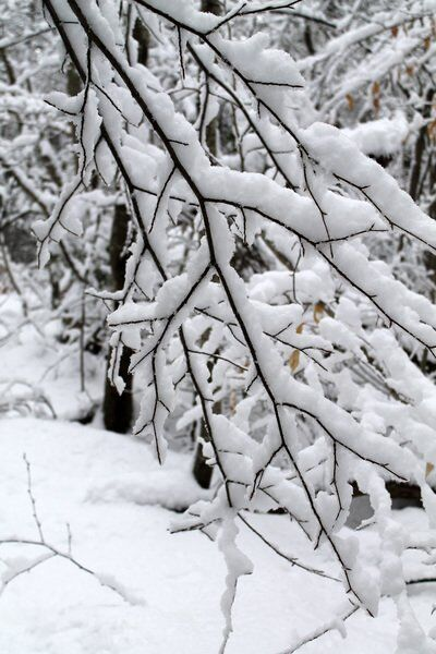 Gardening: How to protect or heal trees damaged by snow