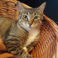 Acadia is up for adoption