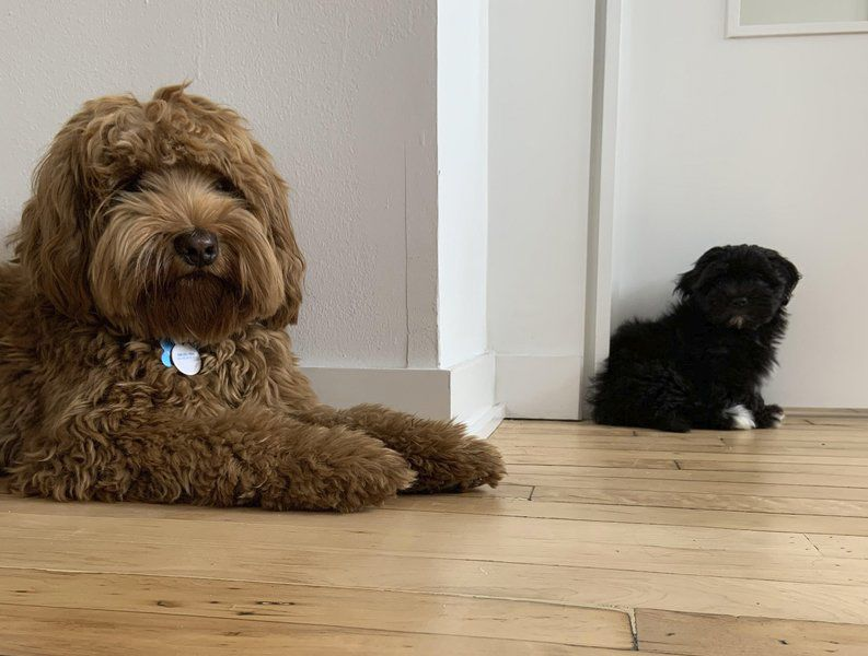 Getting a second dog? Be ready for something different