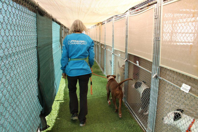 Six ways to help at an animal shelter