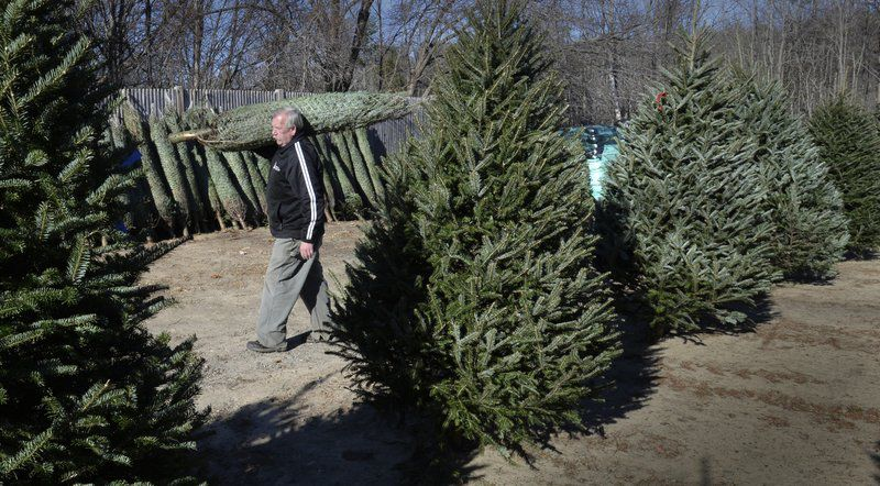 Christmas Trees Symbols Of Hope Holidays For Centuries Local