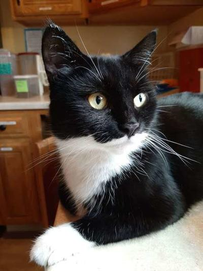 Panda is 'Cat of the Week' at shelter