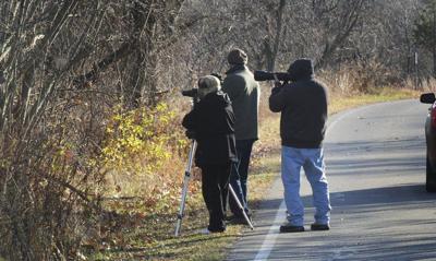 Plum Island ranked America's third 'hottest' birding spot