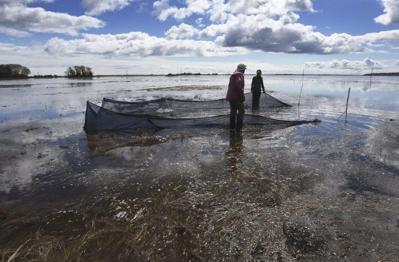 Researchers start study of Great Marsh recovery