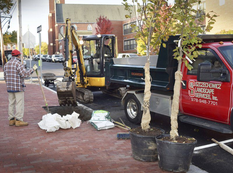 Elms planted to grace Port 'gateway' street