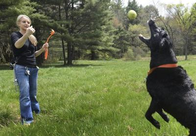 Abuses lead to dog ban at Pipestave Hill playing fields