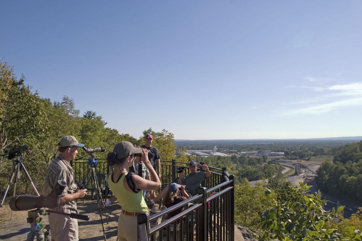 Hawk Watch in Bridgewater