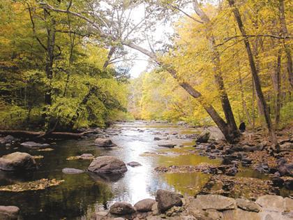 Serenity of Autumn