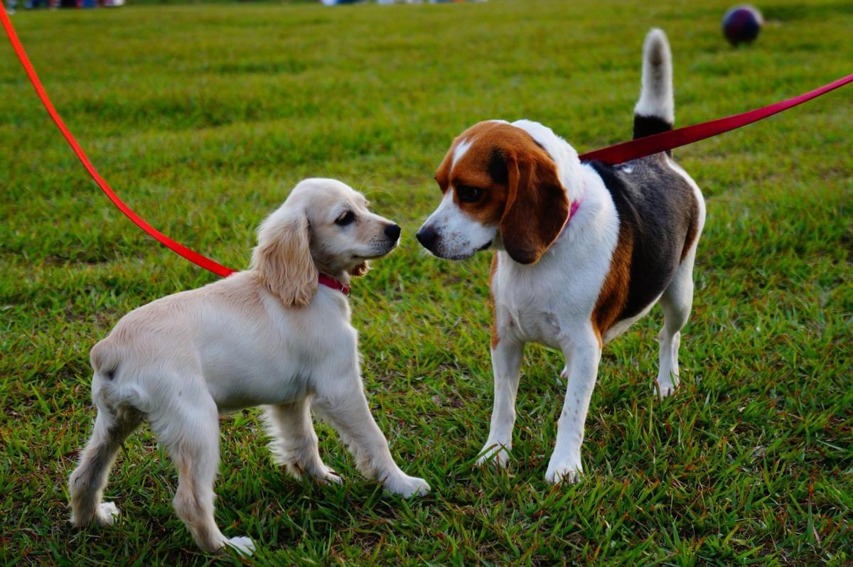 Hunterdon County Off Leash Dog Park renovations have completed