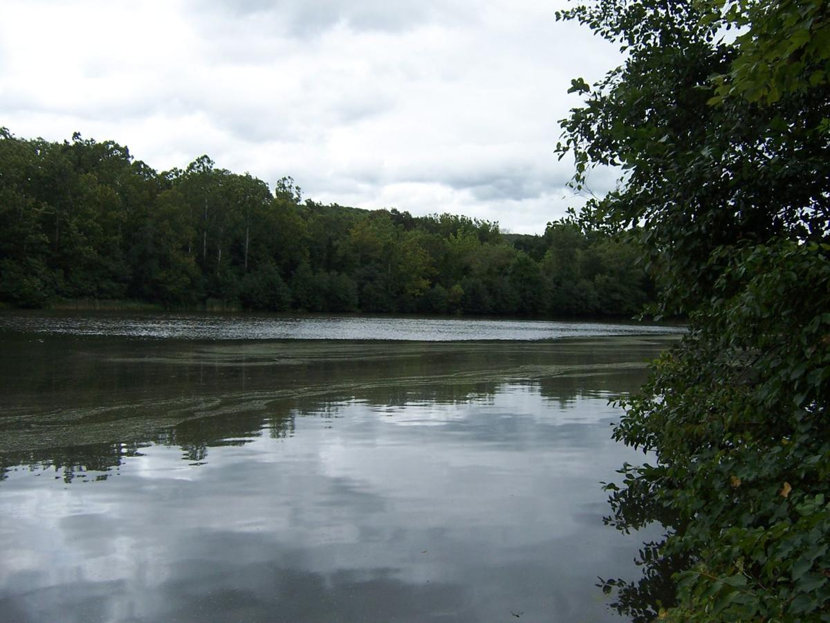 Bedminster Pond