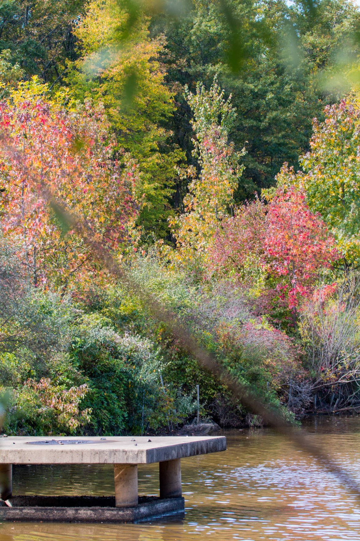 Fall colors at Branta Pond at the EEC