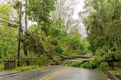 Tree Down In Bernardsville