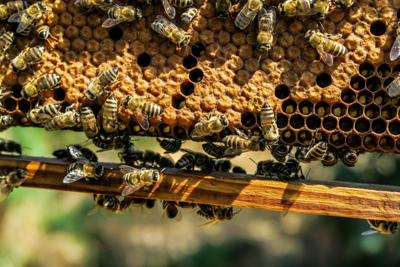 Benefits of bees are the buzz at Rural Awareness talk on Thursday, Sept. 5