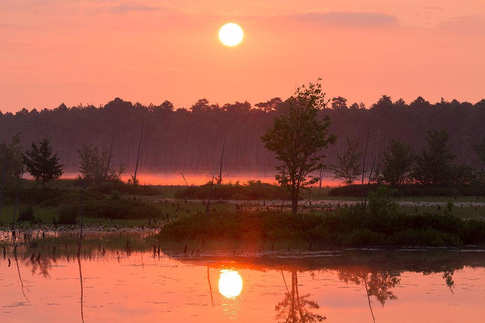 NJ Conservation Foundation to host virtual Summer Solstice Celebration on Thursday, June 17
