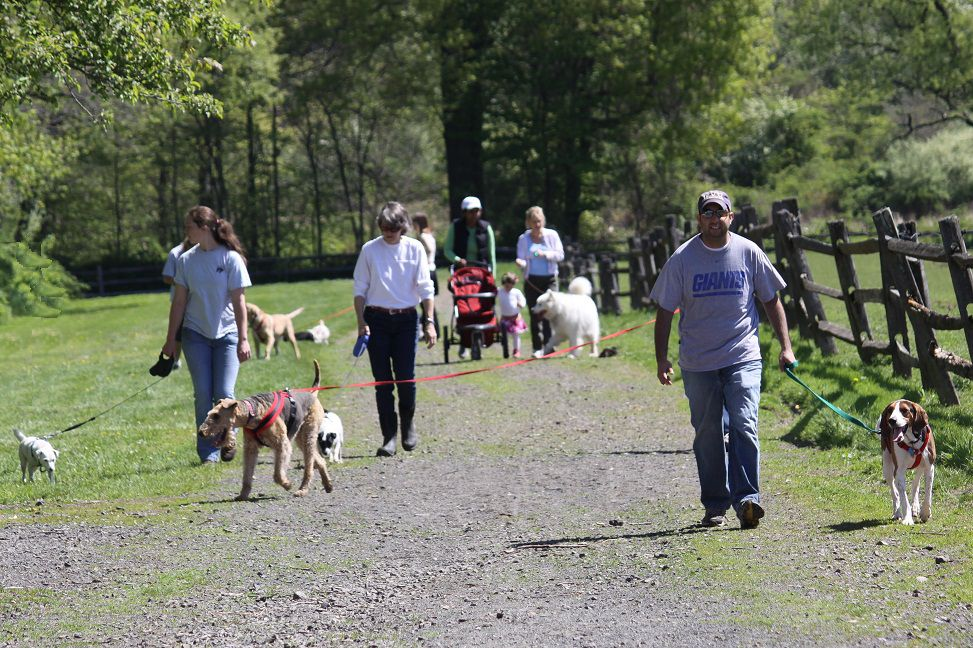 Saturday Dog Walks at Lord Stirling Stable