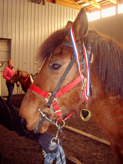 Two Oldwick therapy ponies honored at awards program
