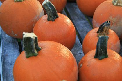 Spookie pumpkins haunt Randolph