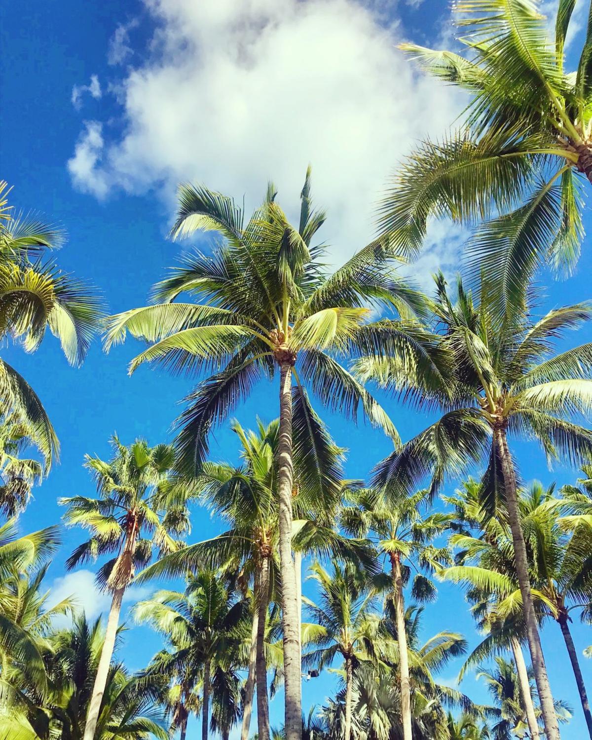 Bahamian Trees
