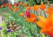 Flowers Galore: Tea and Tour at the Frelinghuysen Arboretum