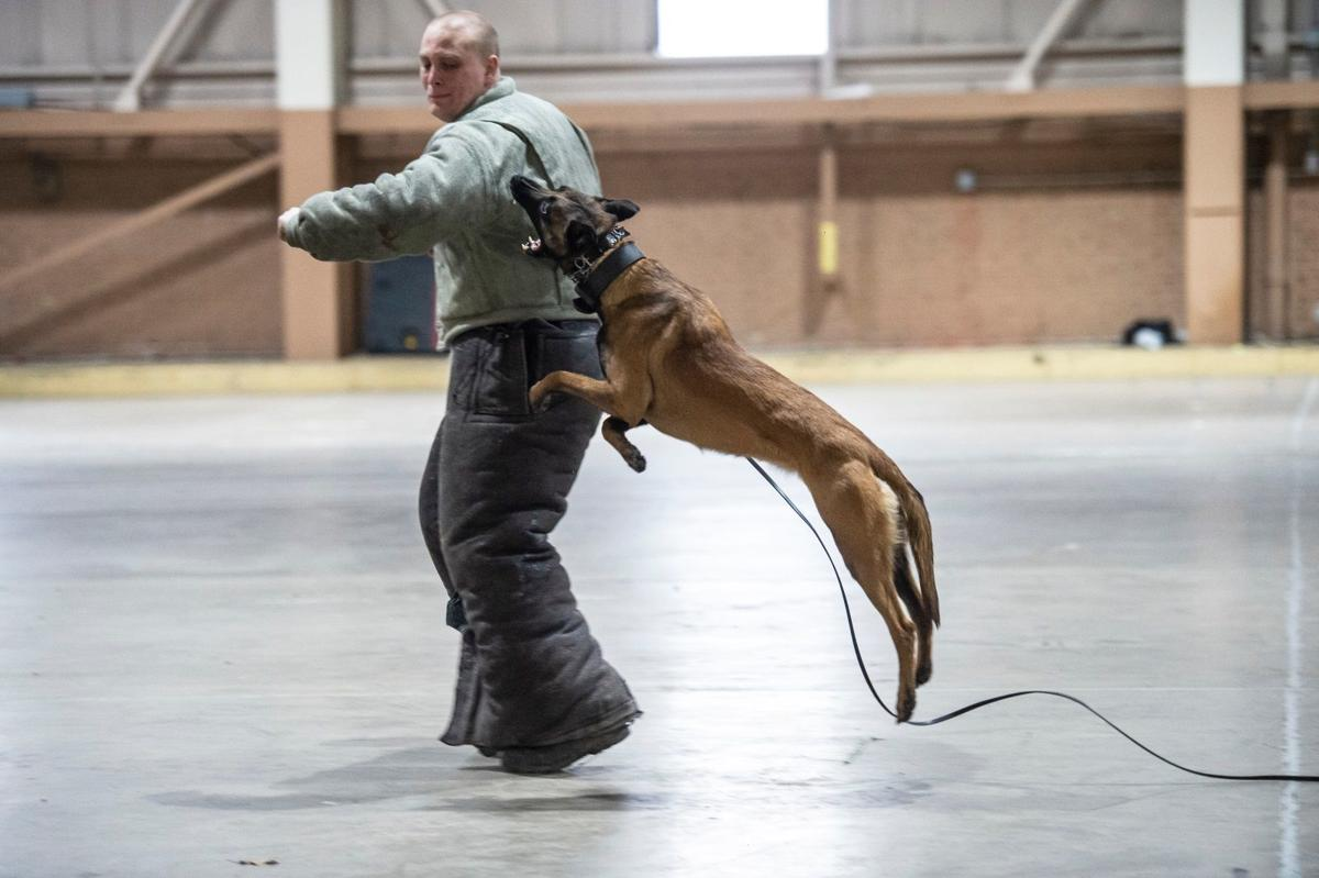 Morris County Sheriff's K-9 dogs and trainers learn new techniques in apprehension