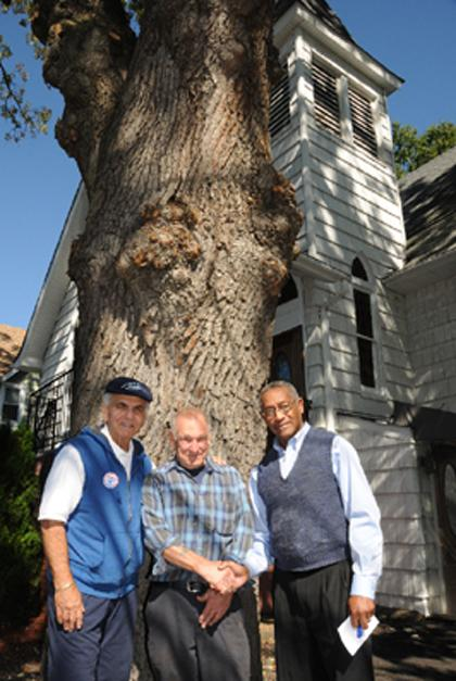 Cerciello takes hand, old Madison oak tree is saved